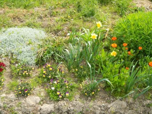 春の花々。
