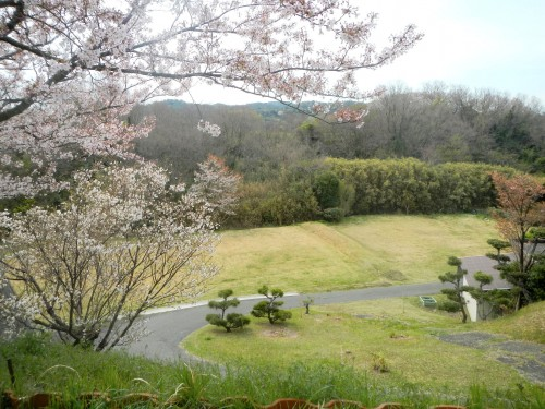 お気に入りのキラキラスポット。奥にオリーブ園があります。