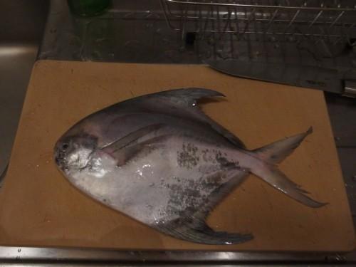 炭焼き後、近所の漁師さんからもらったマナガツオ。